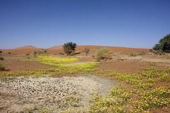Weltweit nehmen Trockenheit und Wüstenbildung zu