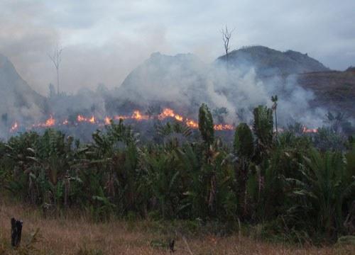 Brandrodungen mit dramatischen Folgen in Südostasien