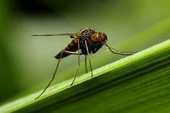 Überflutungsgebiete: Nach der Flut folgt die Insektenplage und nicht nur das