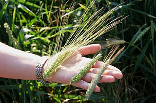 """Erstaunlicher Erfolgsbericht der FAO: """"Hunger quasi wie von Geisterhand auf dem Rückzug""""?"""