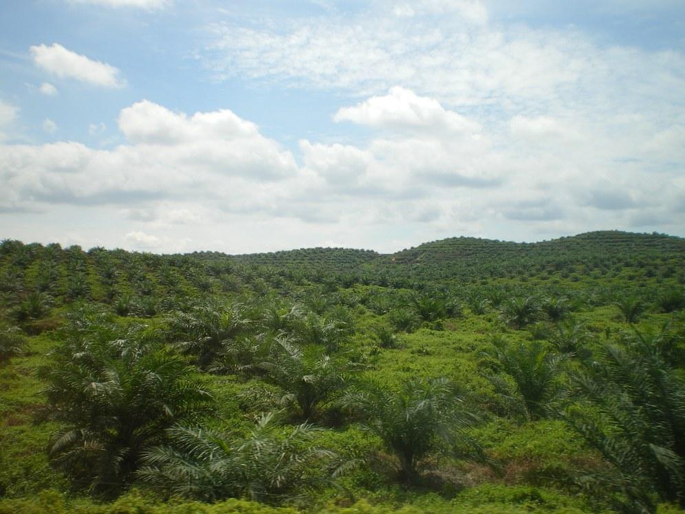 Terror und Vertreibung für Palmölanbau in Indonesien
