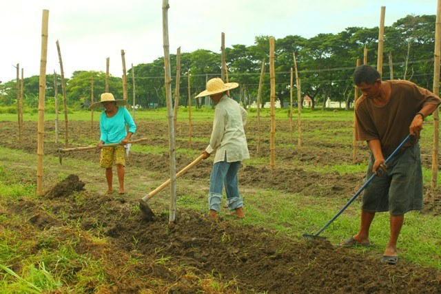 Philippinen: Ministerium für Agrarreform lässt Ernten zerstören