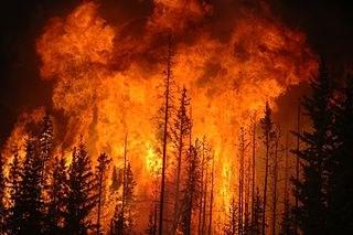 Türkische Armee brennt Wälder in Kurdistan nieder