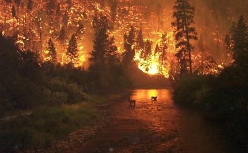 Zunehmende weltweite Wetterextreme und regionale Umweltkatastrophen