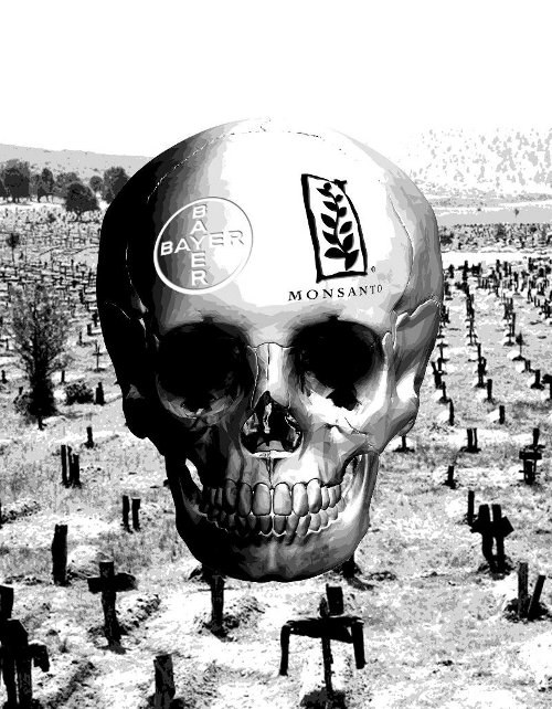 Übernahme-Poker Bayer-Monsanto bedroht die Welternährung
