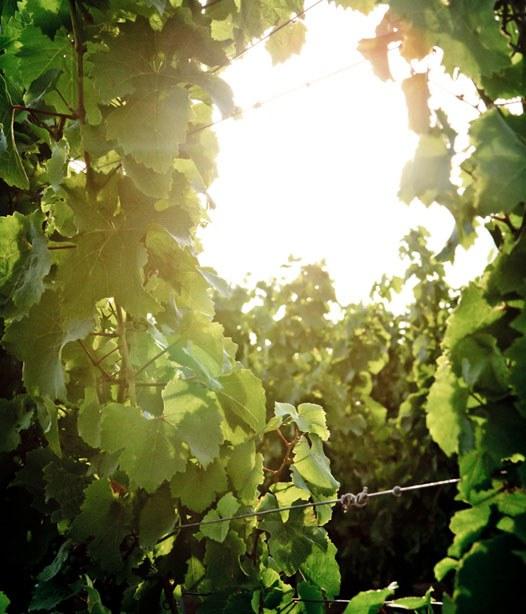 Heute abend noch nichts vor? Im Treff International in Gelsenkirchen kann man guten Wein verkosten!