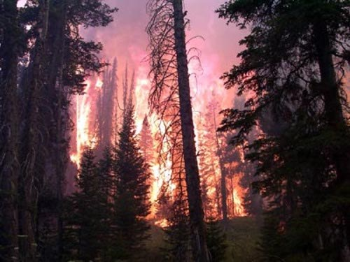 Verheerende Waldbrände in Südeuropa