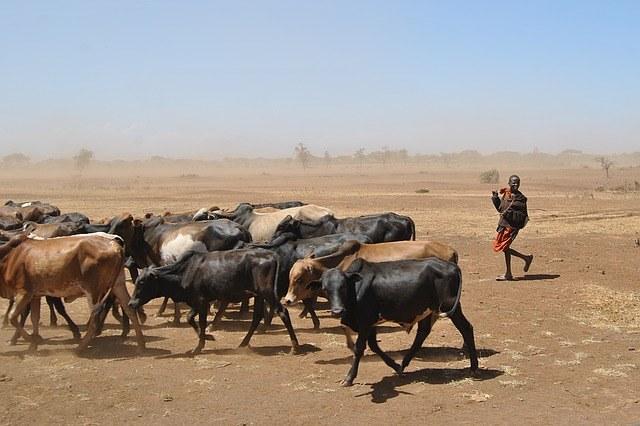 Weltwassertag: Dürre in Ostafrika