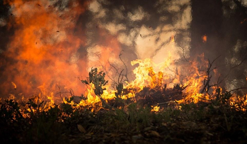 Waldbrände in Portugal wüten weiter