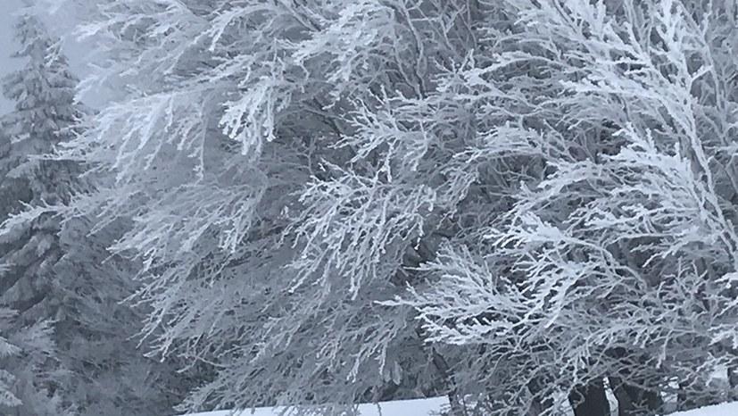 Kältewelle in den USA kostet Menschenleben