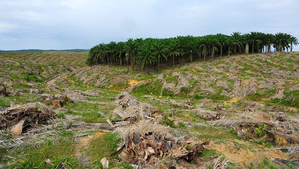 Umweltverwüstung durch Palmölplantagen (Foto: fotolia.com | #41171093 | Urheber: liew0227)
