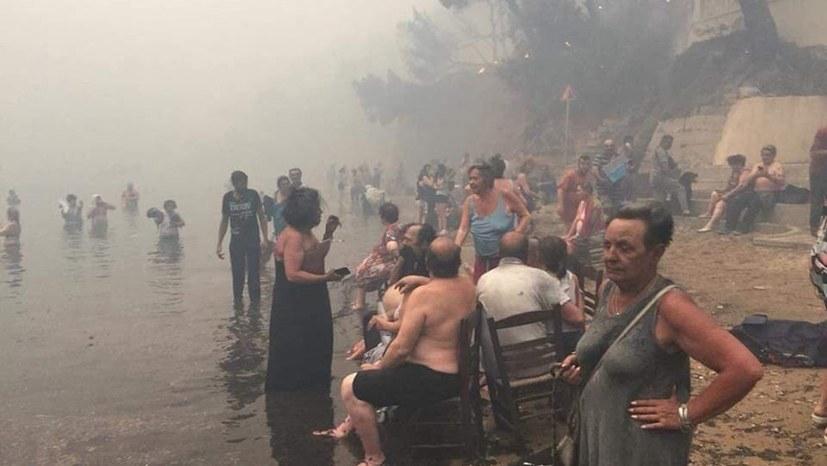 Ursachen der Waldbrand-Katastrophe radikal überwinden!