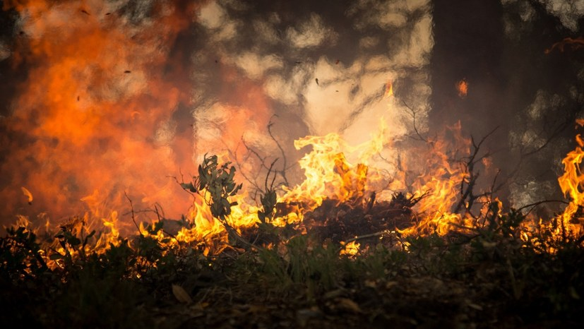 Extremdürre - Waldbrände in Schweden und Griechenland außer Kontrolle