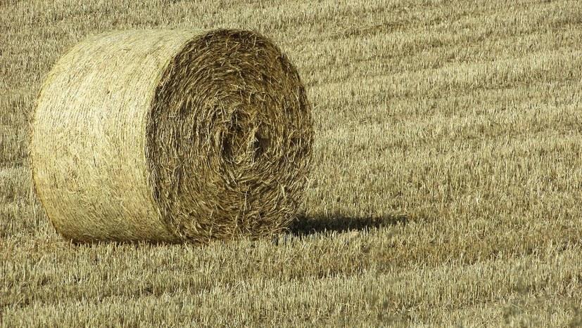 Wachsende Ertragsausfälle - kleine und mittlere Bauern zunehmend verzweifelt