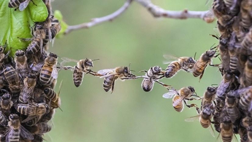 """Über eine Million Unterschriften für das Volksbegehren """"Rettet die Bienen"""""""