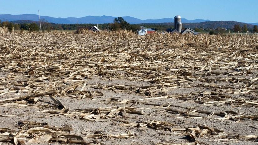 Zerstörung von Böden und Wäldern beschleunigt Übergang in die globale Umweltkatastrophe