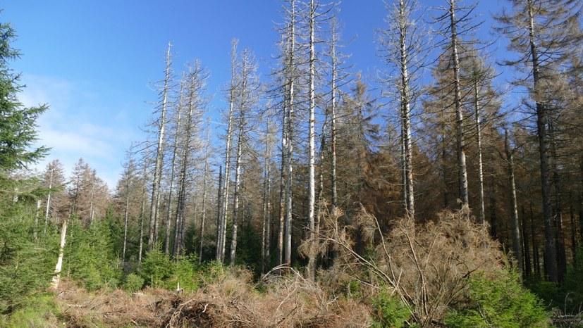 Monopolparteien weder bereit noch willens, etwas gegen das Waldsterben zu unternehmen