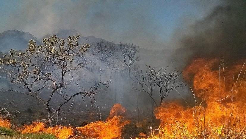 Der Amazonas-Regenwald brennt – wer sind die Brandstifter?
