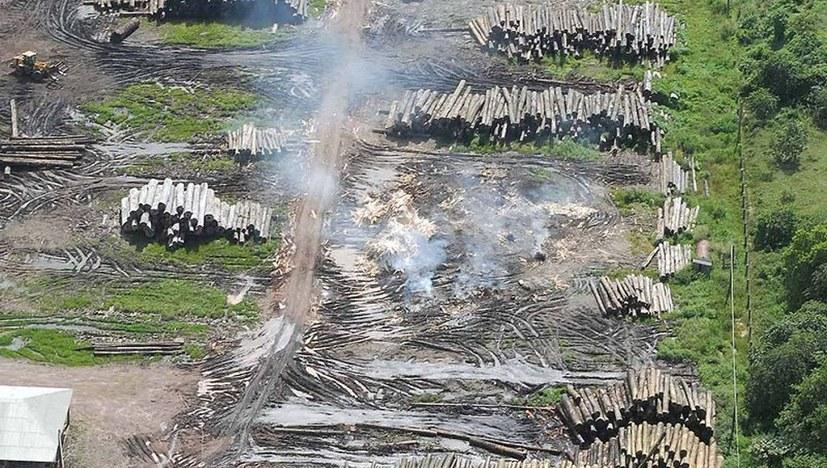 Umweltkrise verschärft sich!