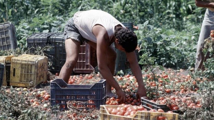 Feste Beschäftigung und Gesundheitsversorgung für Saisonarbeiter und -arbeiterinnen gefordert