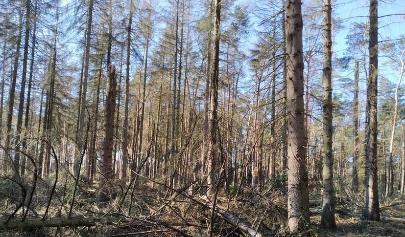 Nur noch 21 Prozent aller Bäume sind gesund