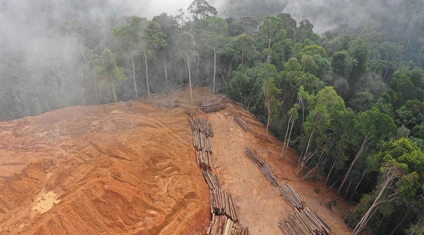 Der Amazonas-Regenwald ist gekippt!