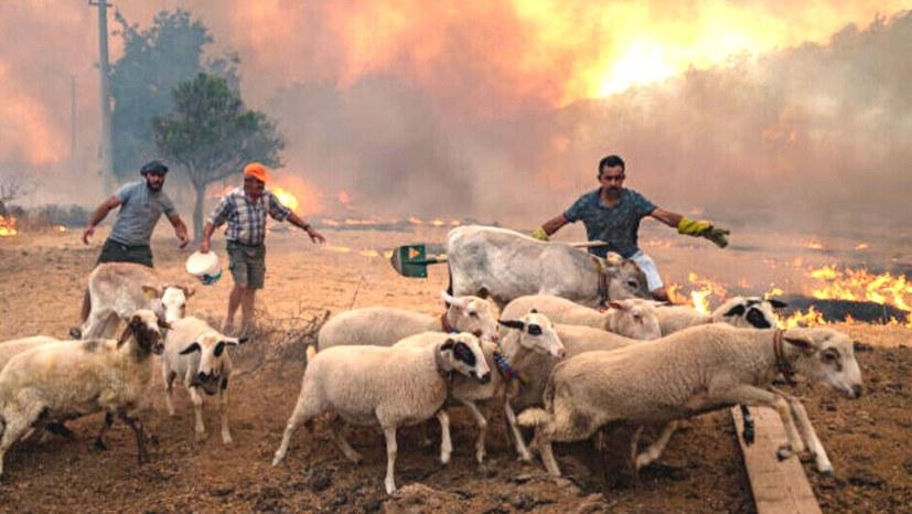 Waldbrände und Überschwemmungen: Erdoğan ist Teil dieser Katastrophe