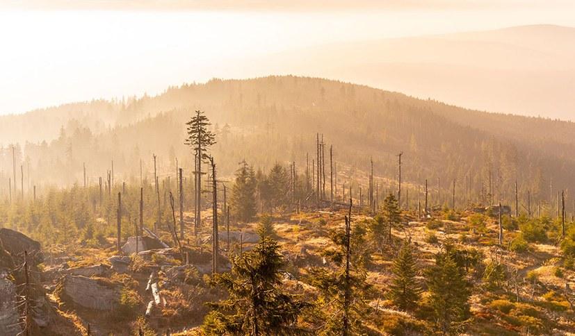 Der Kampf gegen das Waldsterben