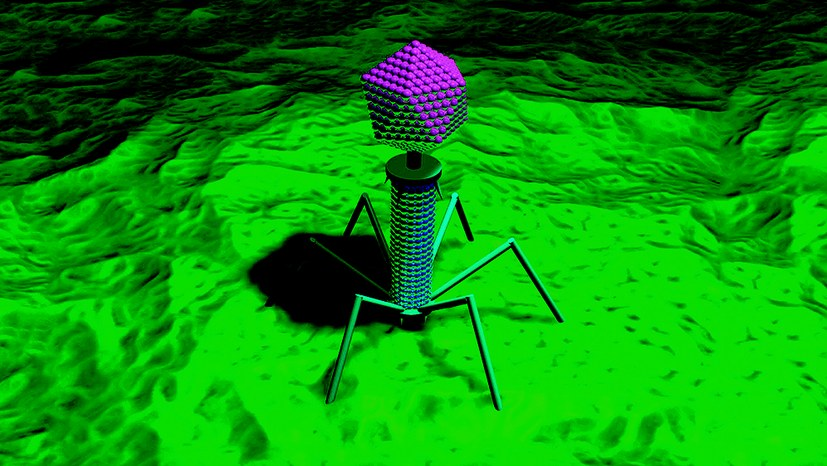 Die Bakteriophagen-Therapie – eine medizinische Errungenschaft der sozialistischen Sowjetunion